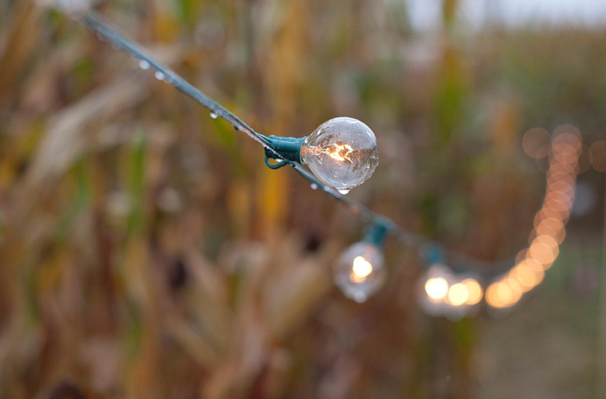 Freebird Imagery outdoor string of mini lightbulbs