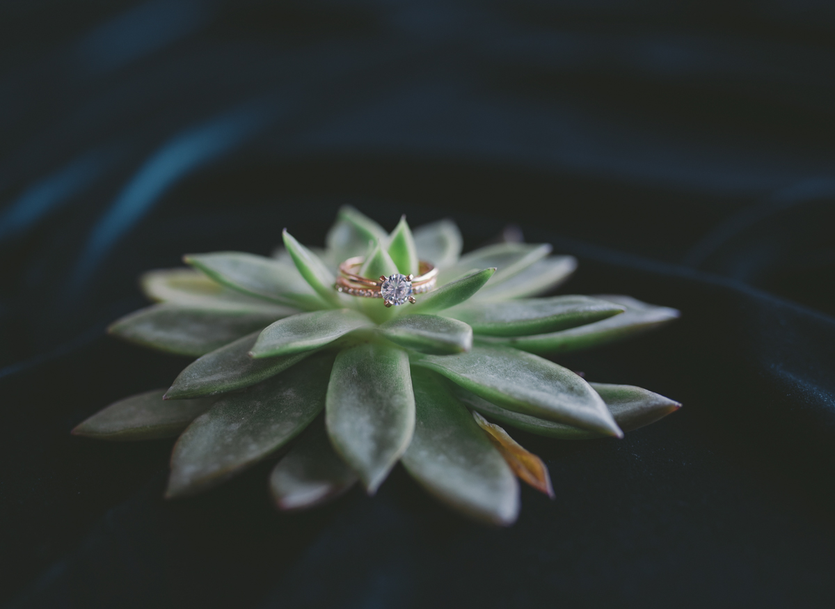 we are young worth the wait studios diamond ring on succulent plant