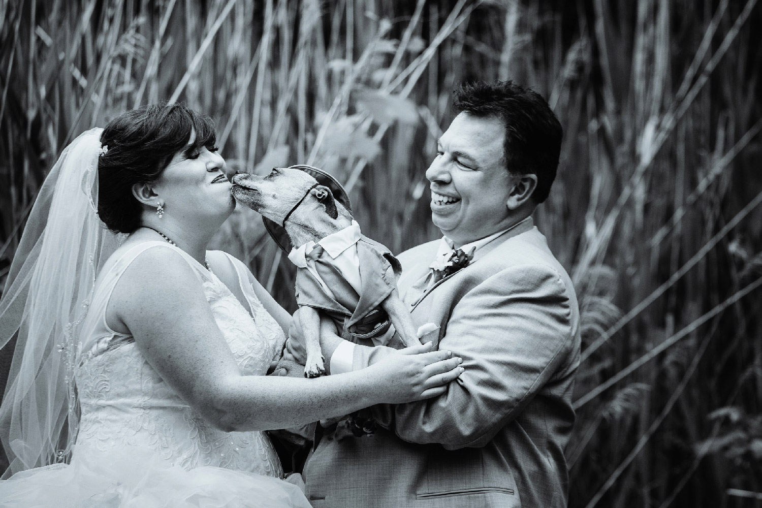 Newly married wedding couple with their dog giving them kisses with cattails in background Upstate New York Wedding Photographer Jacqueline Connor Photography