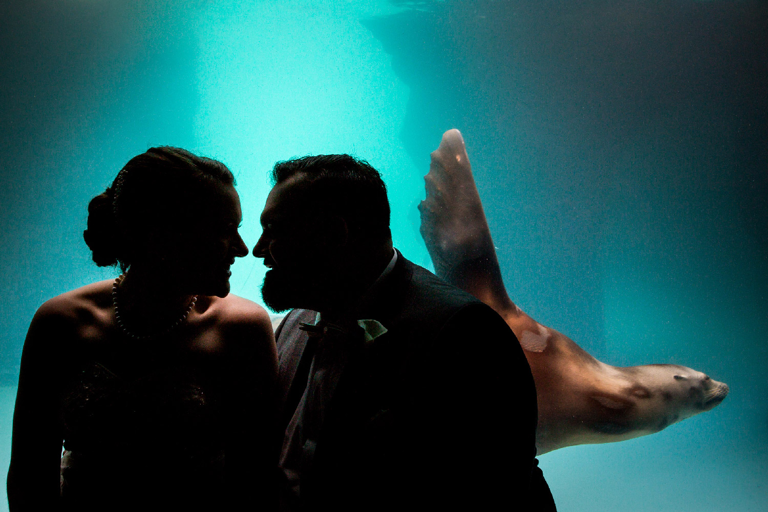 Newlywed couple leaning in for a kiss at aquarium in front of sea lion tank Upstate New York Wedding Photography Jacqueline Connor Photography