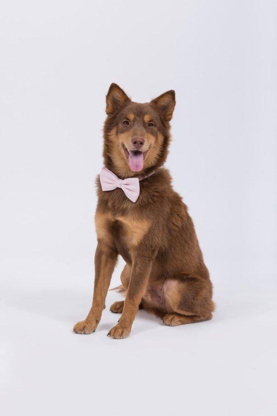 Dog Bow Tie by Matchimony