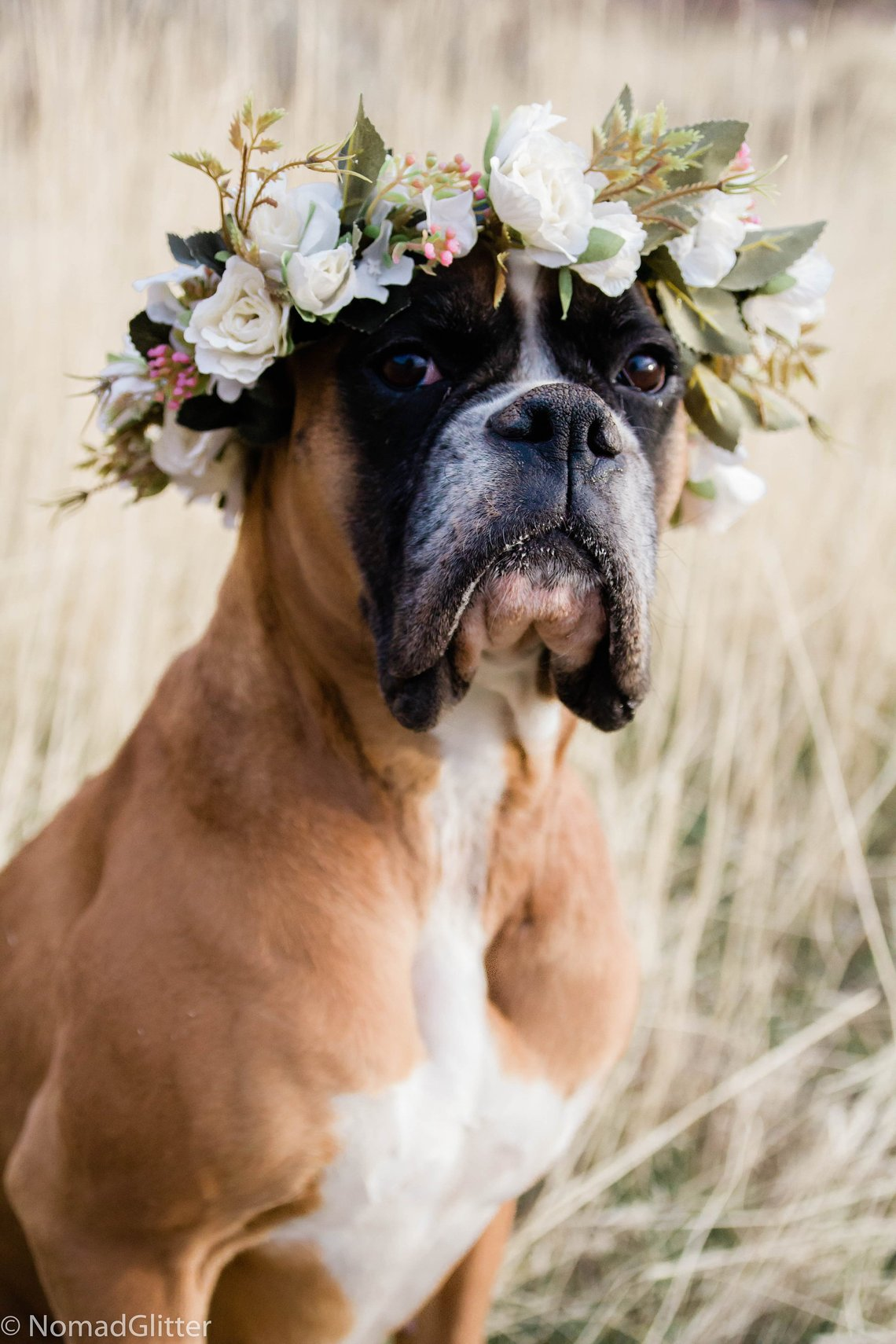 White Rose Dog Flower Crown by Nomad Glitter