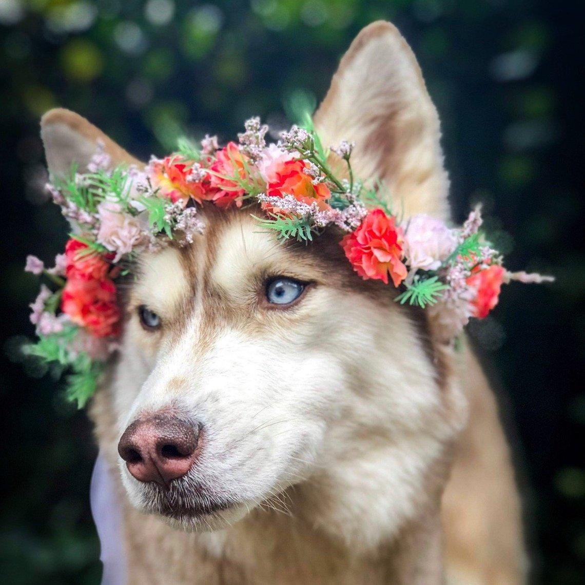 Wildflower Dog Flower Crown by Hippie Starr Creations