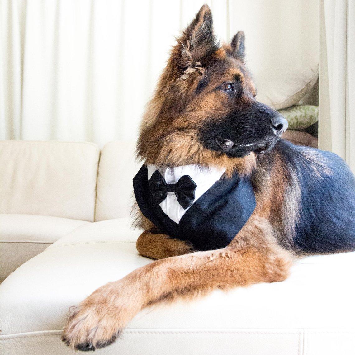 Tuxedo Dog Bandana by Fussy Foxau