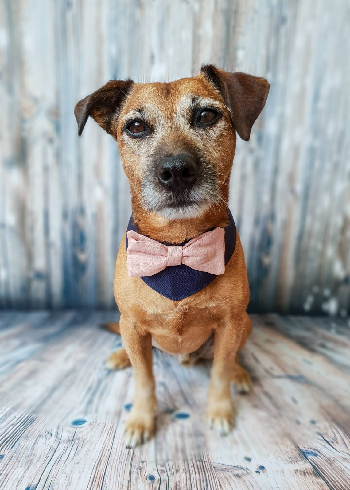Pink and Blue Bowtie Dog Bandana by Giddings Gifts