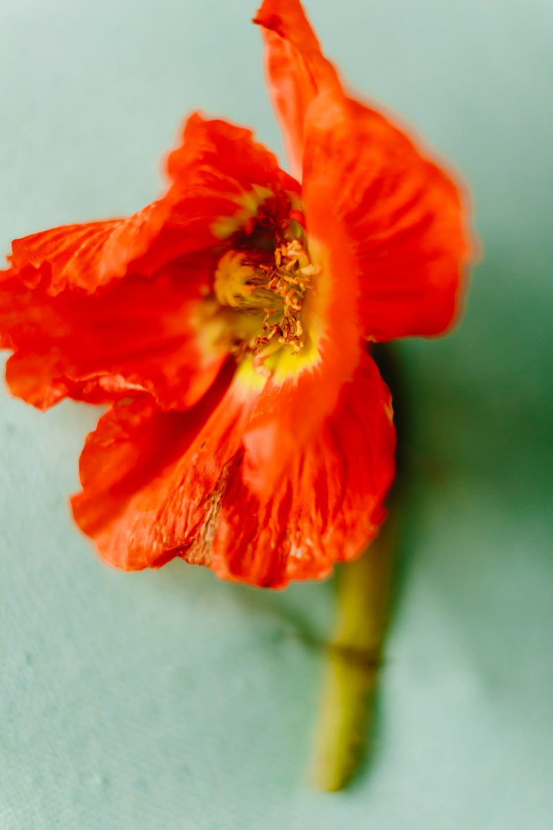 wes anderson inspired wedding brooklyn new york orange flower on blue background