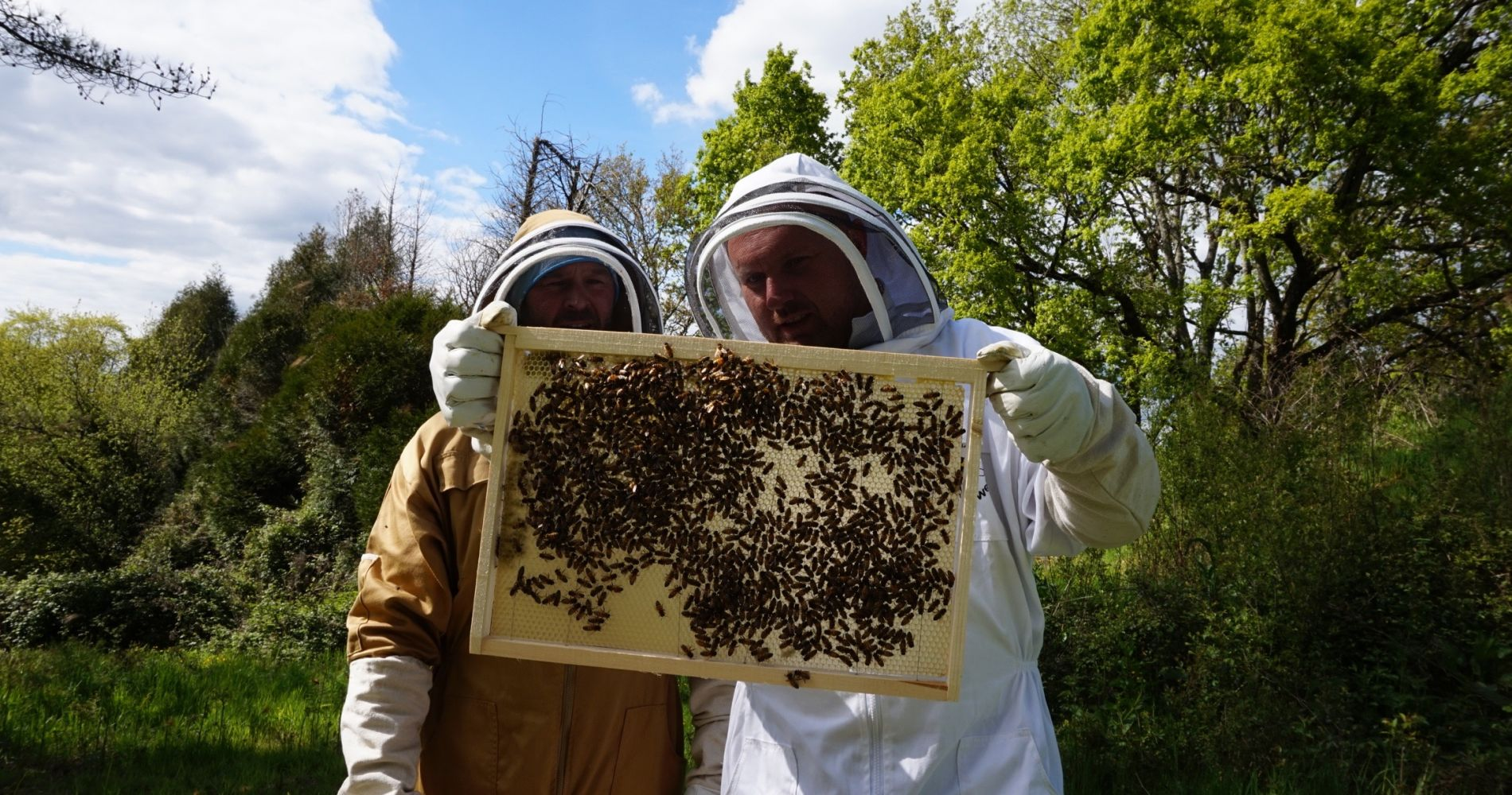 two night beekeeping honeymoon experience at a villa in france