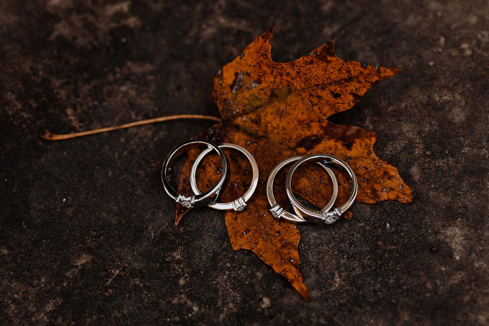 LGBTQ Louisville Kentucky Wedding at Hermitage Farm Crystal Ludwick Photo wedding rings on leaf