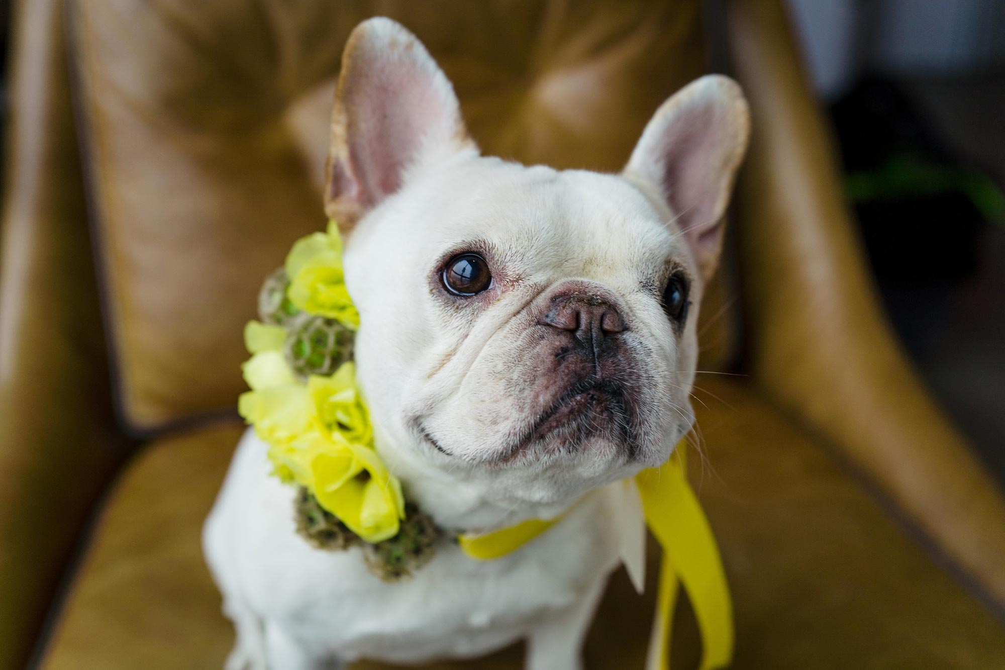 Bright Neon Wedding Inspiration at The Bowery Hotel NYC showing couples french bulldog JC Lemon Photography