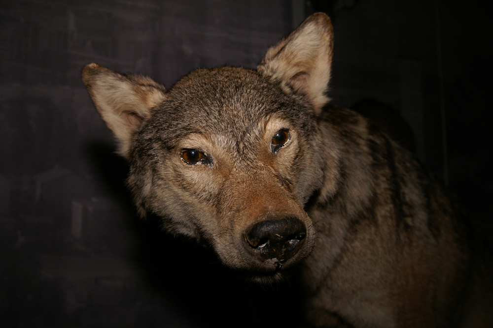 webwolfshop.jpg