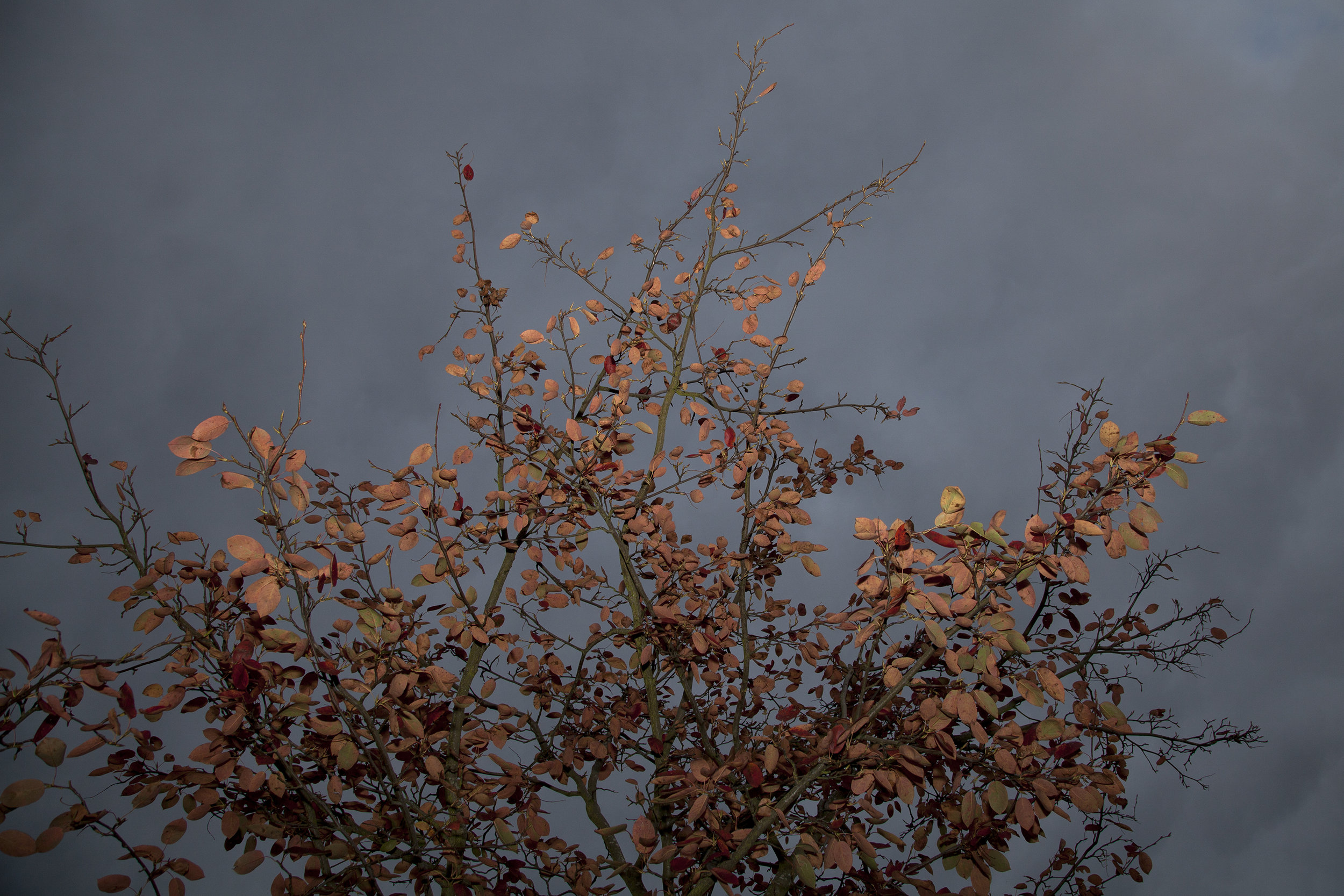 Photo-Canopy