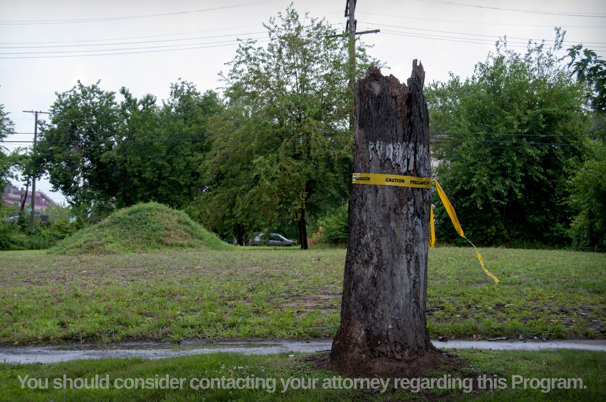 45-Tree-Caution+Tape-Contact+A-3578947084-O.jpg