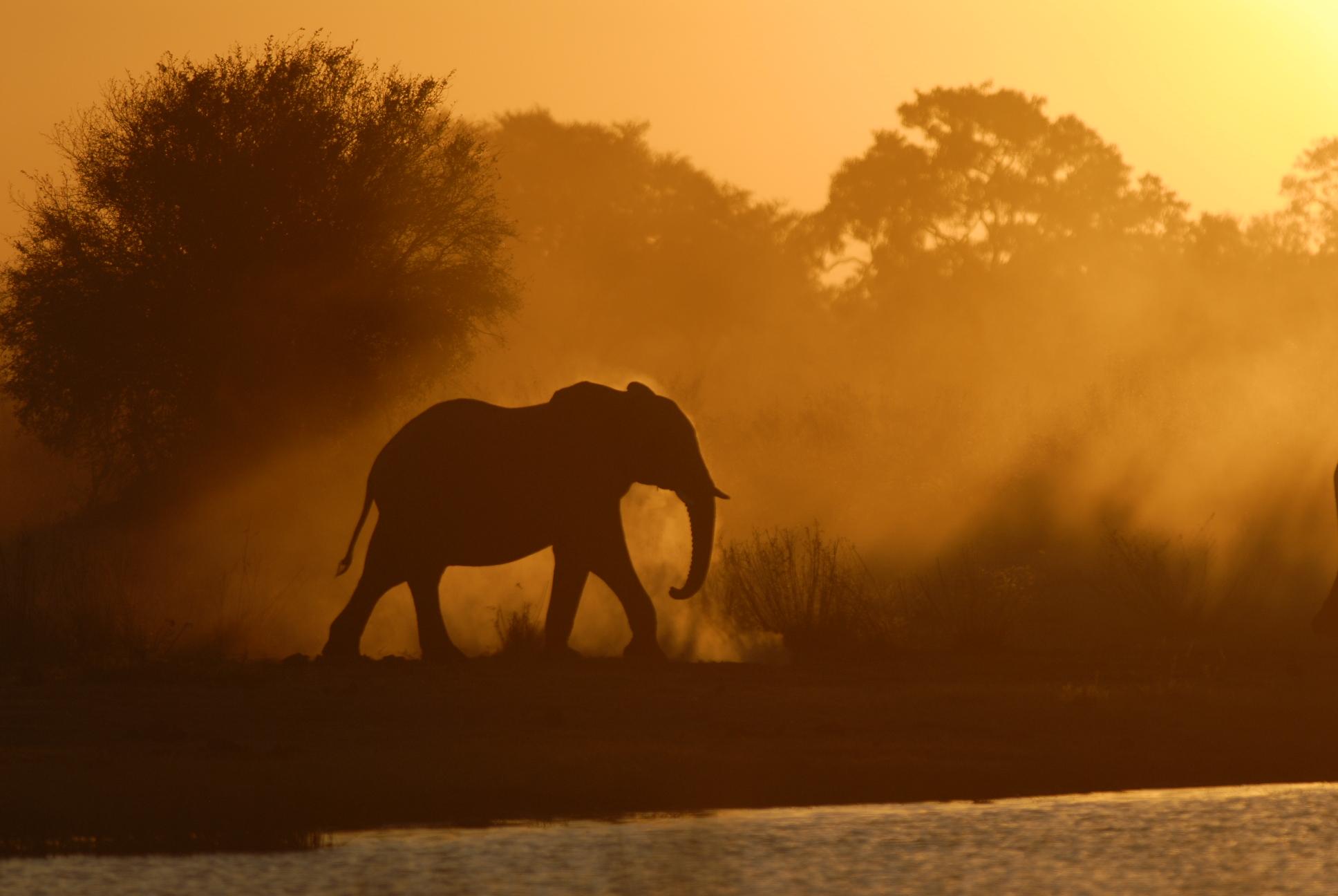 Elephant Dust sunset.JPG