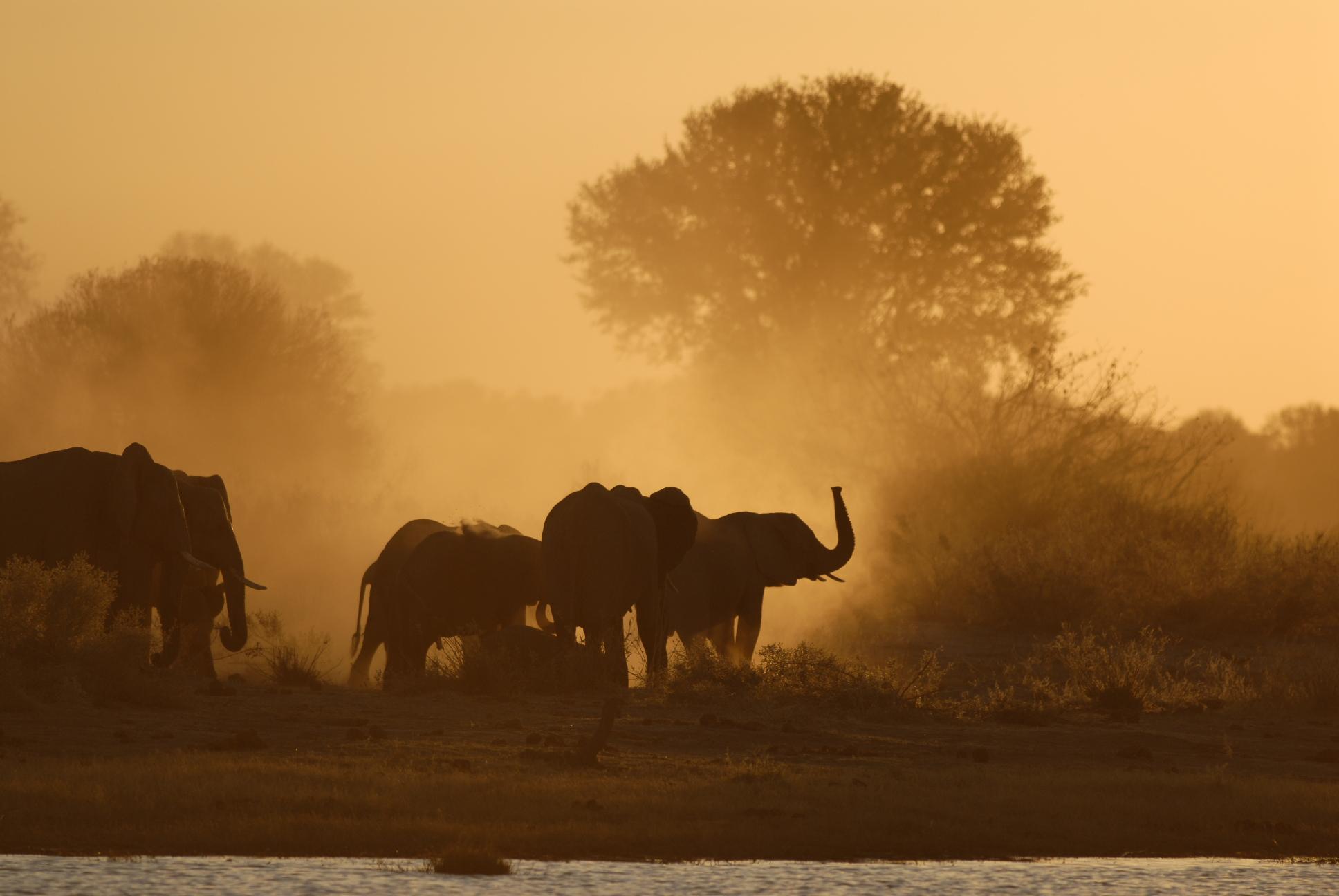 Herd Elephants N Botswana.JPG
