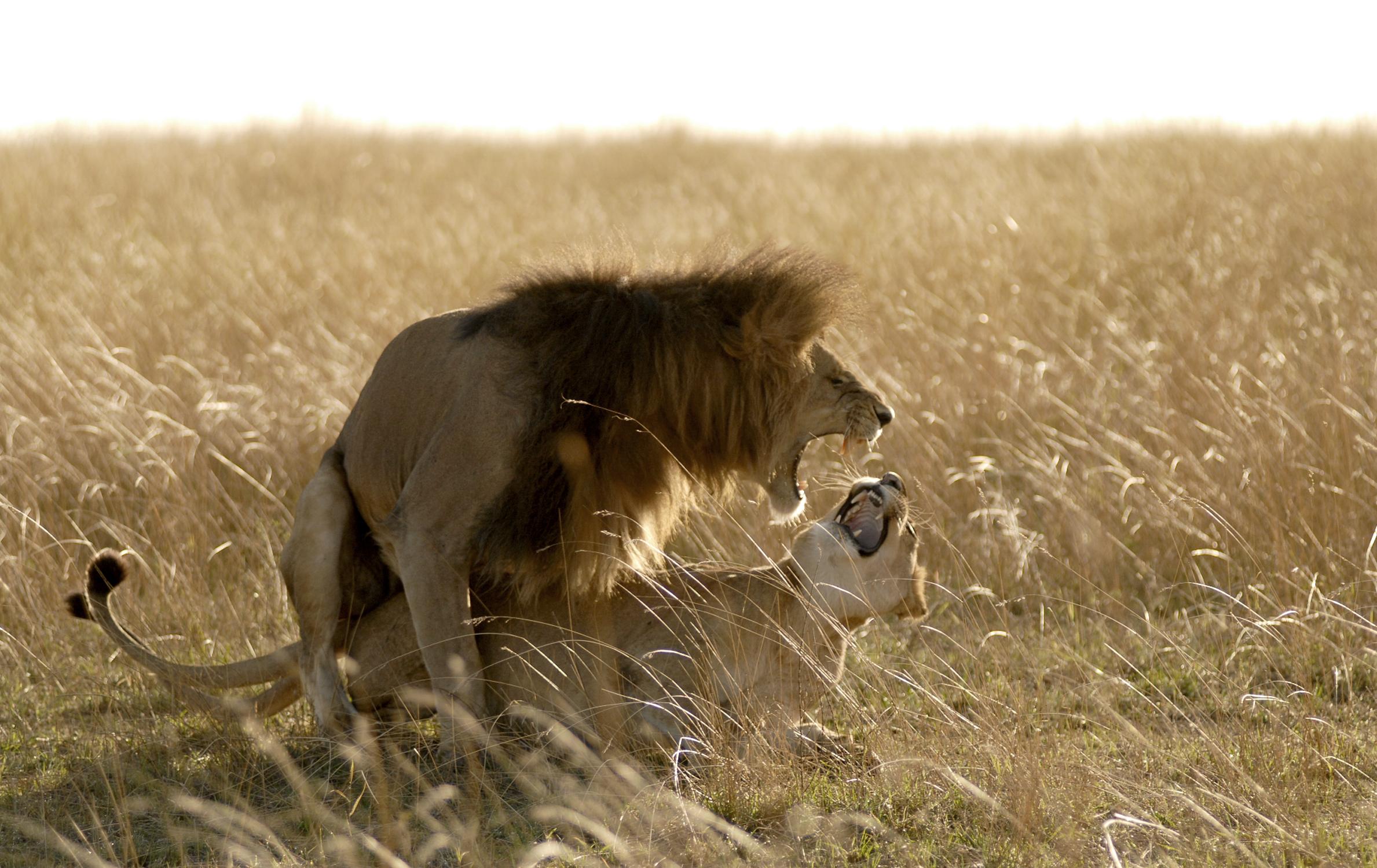00C_Africa-Copyright©ianjohnson2014.jpg