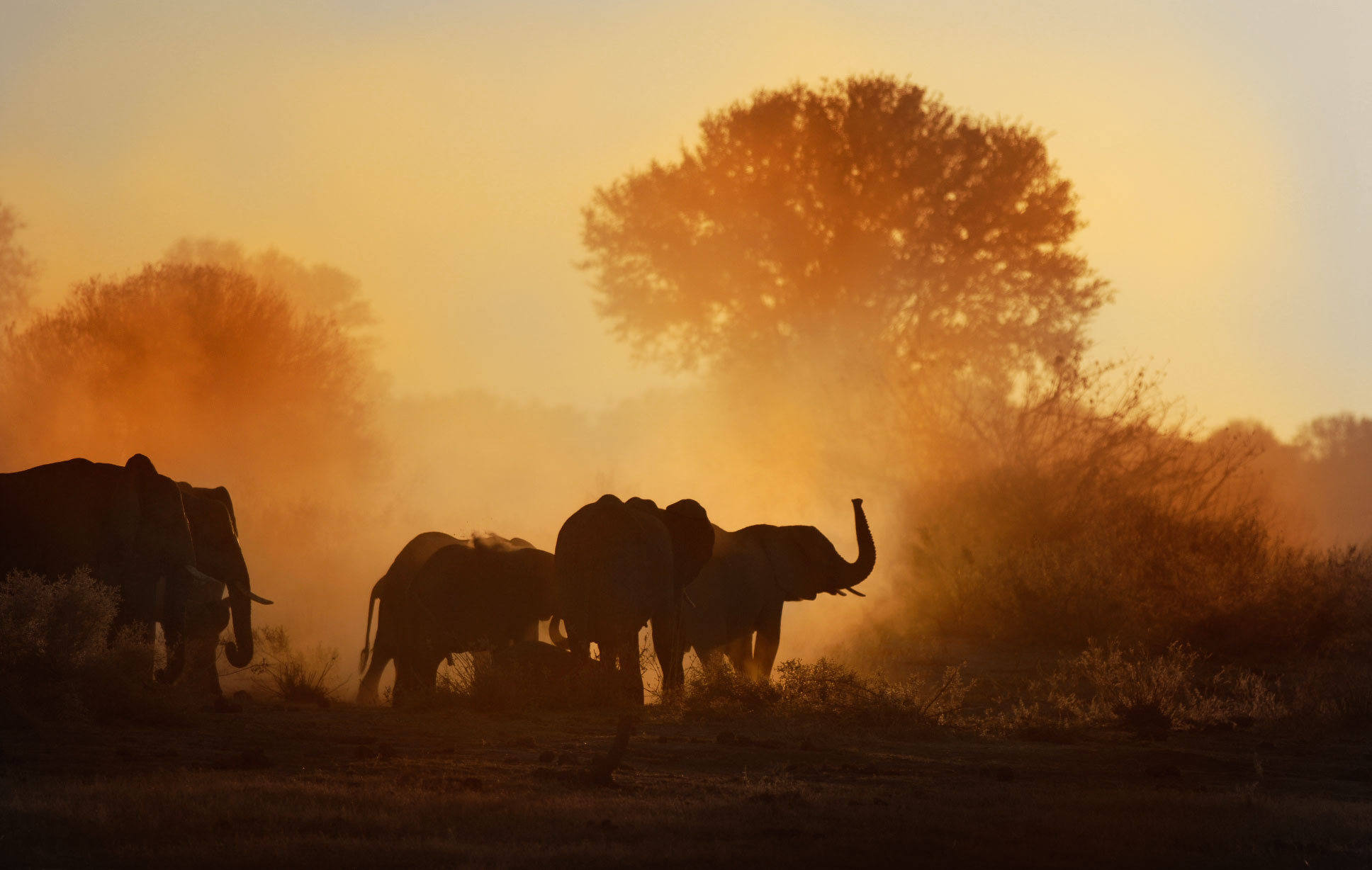Herd-Elephants-N-Botswana1.jpg