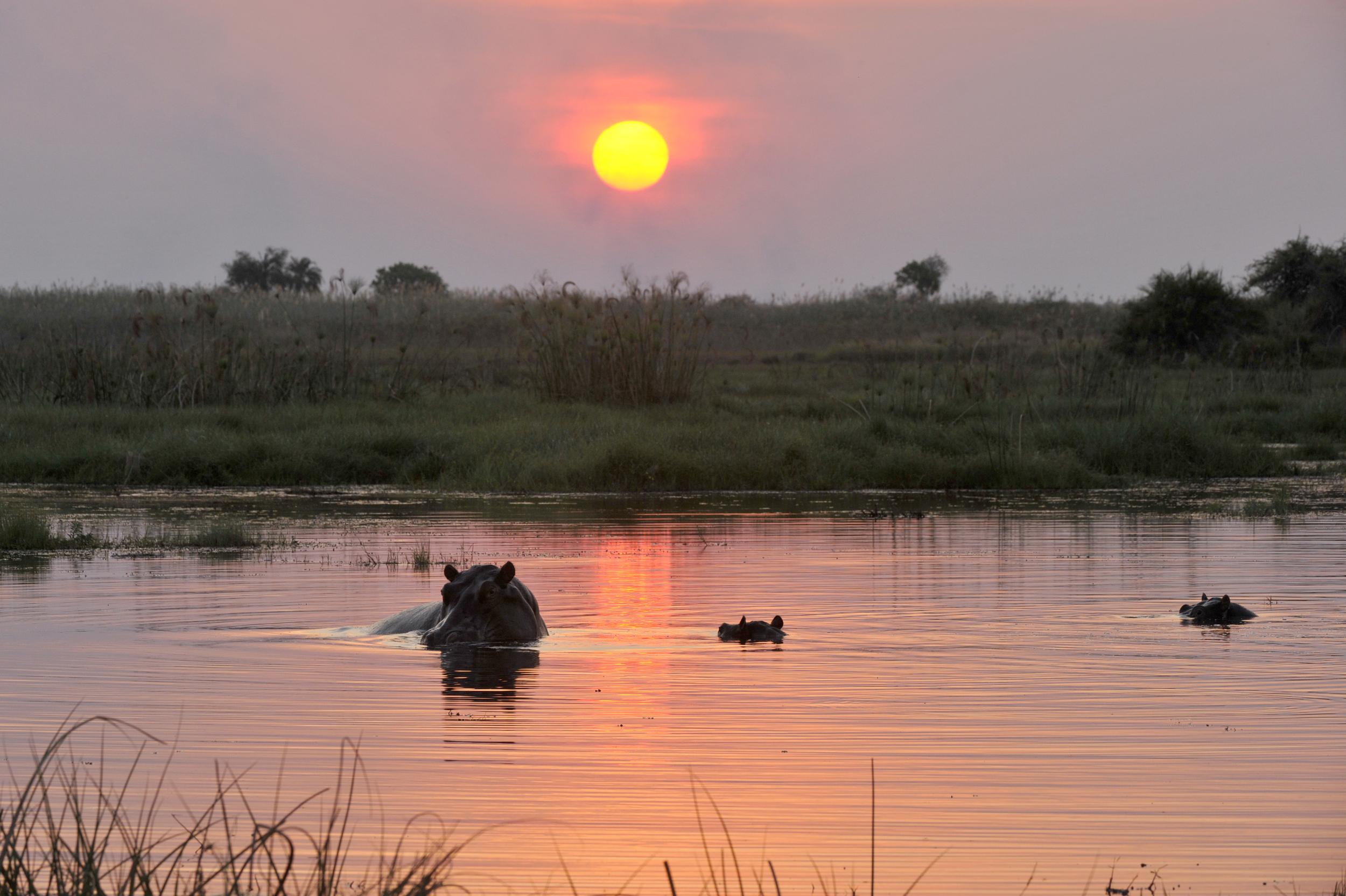 019_Africa-Copyright©ianjohnson2014.jpg