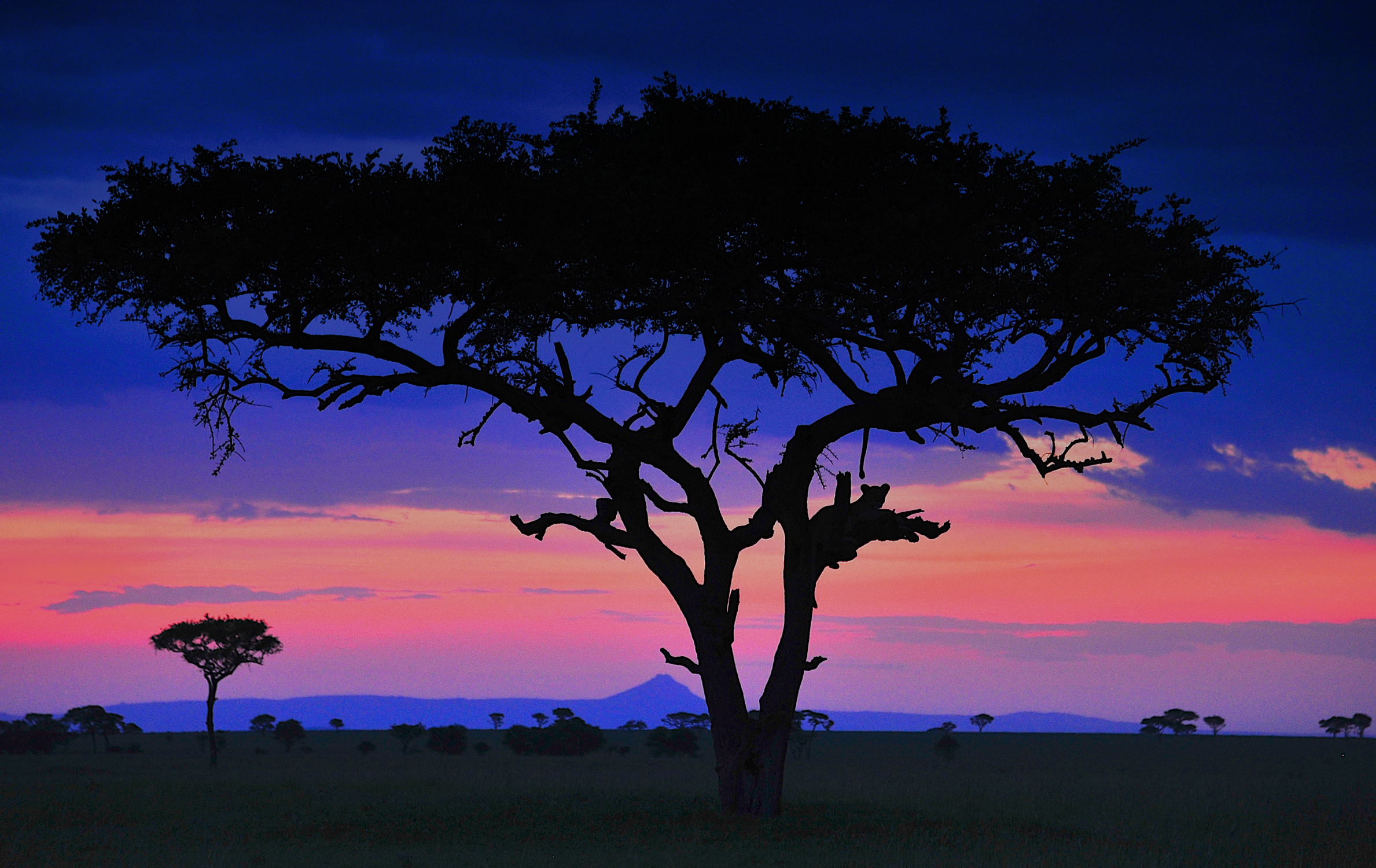 African Pride - The unfolding of an African tale