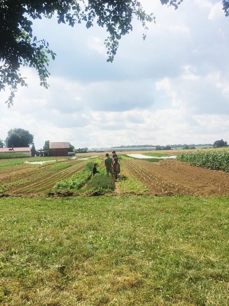 志工們集合在田裡學習怎麼採收蔬菜