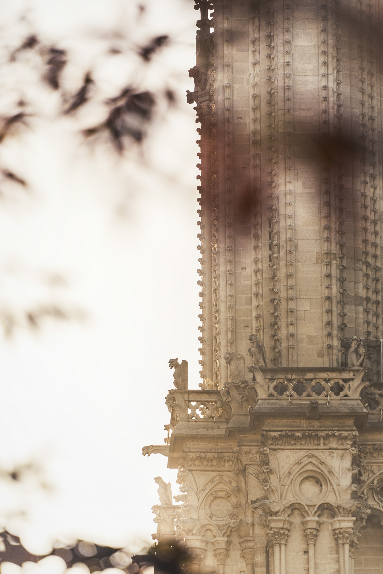 21_STOKES_NOTRE_DAME_CATHEDRAL_0075.jpg