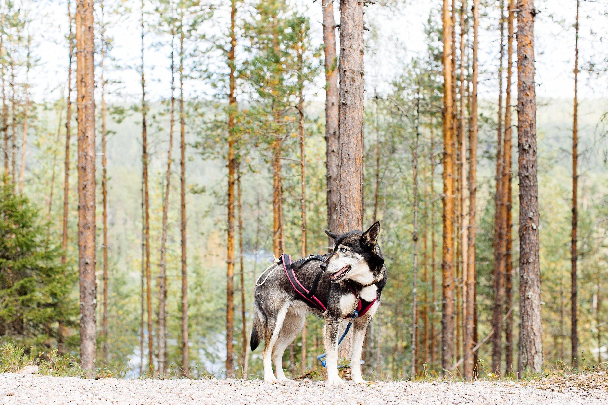 APitts_Finland_537.jpg