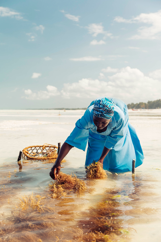 APitts_Condor_Zanzibar_105.jpg