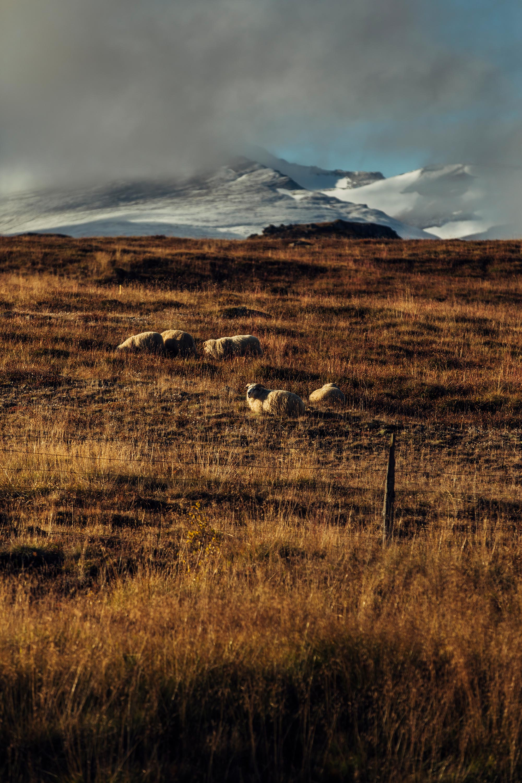 APitts_Hemispheres_Iceland_302.jpg