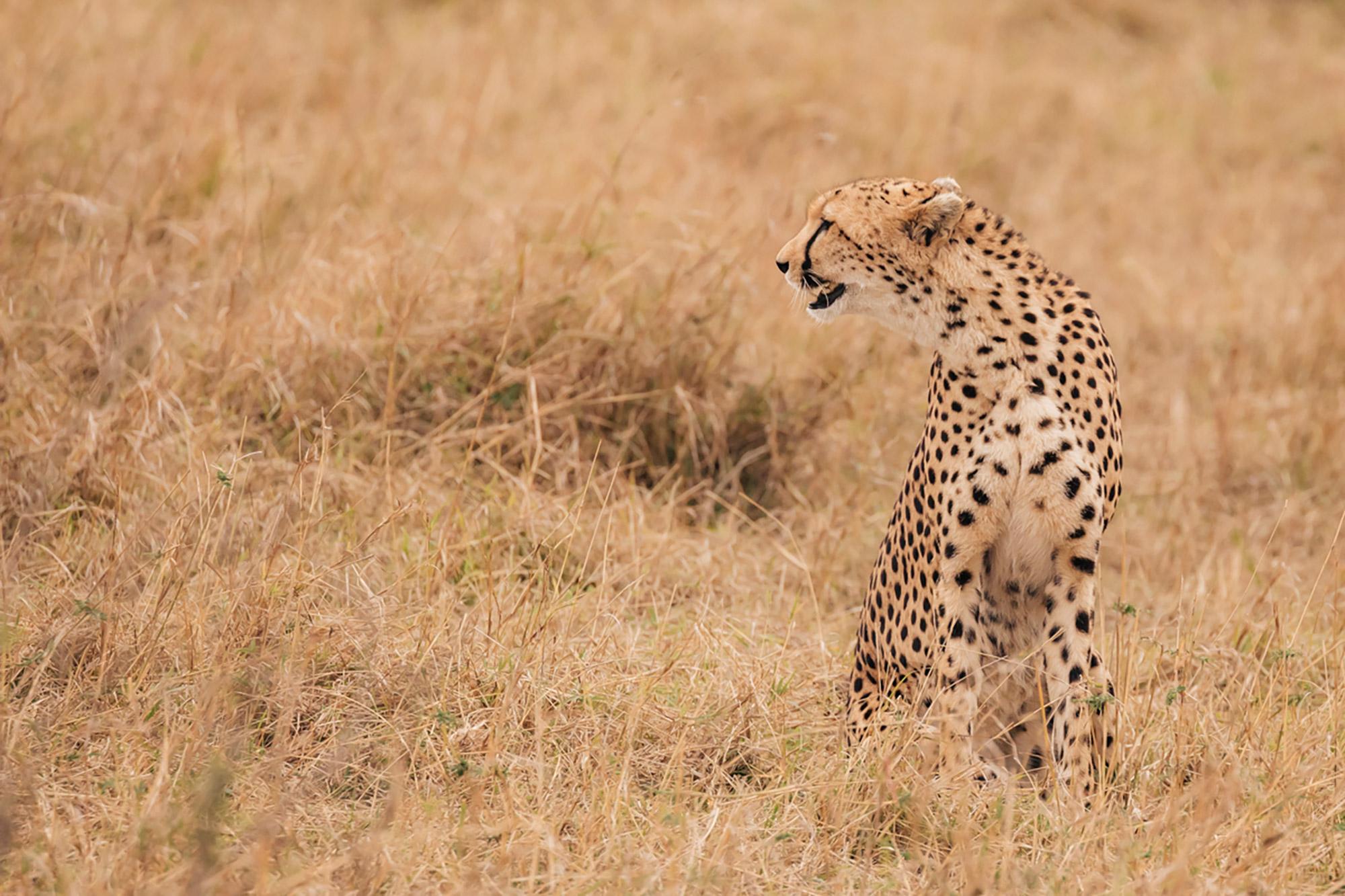 APitts_Condor_Kenya_092-2-2.jpg