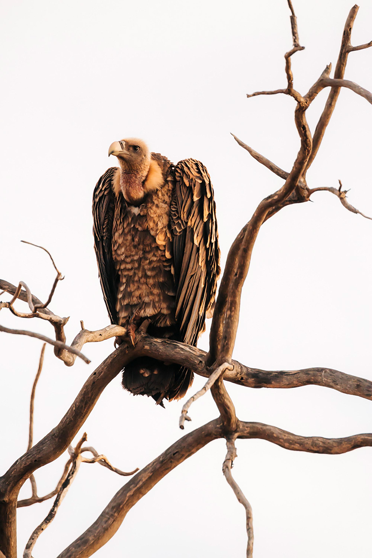 APitts_Condor_Kenya_332-2.jpg