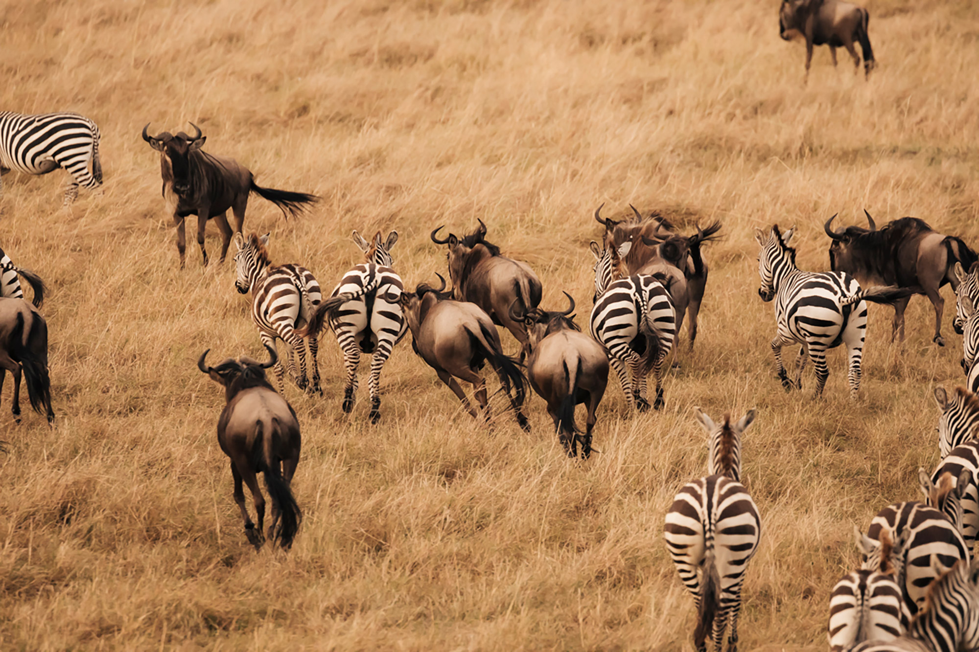APitts_Condor_Kenya_137-2.jpg