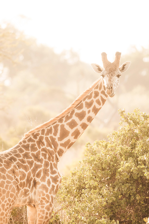 APitts_Condor_Kenya_364.jpg