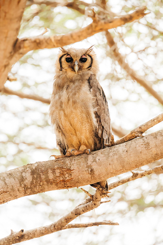 APitts_Condor_Kenya_384.jpg