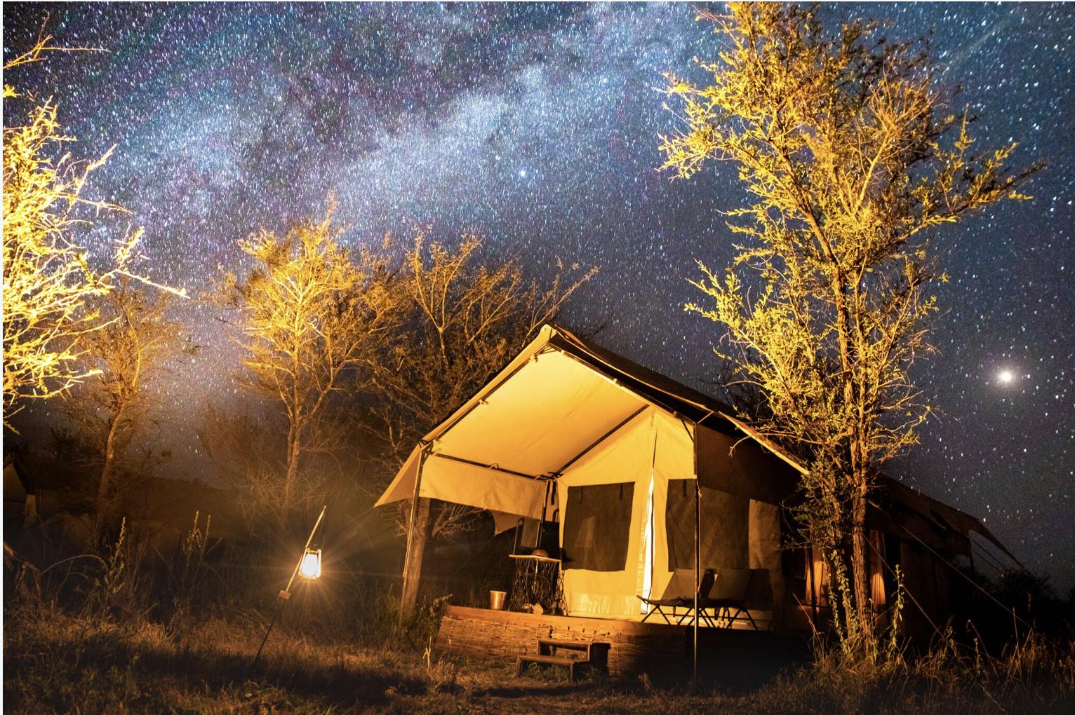 Safari Under The Stars