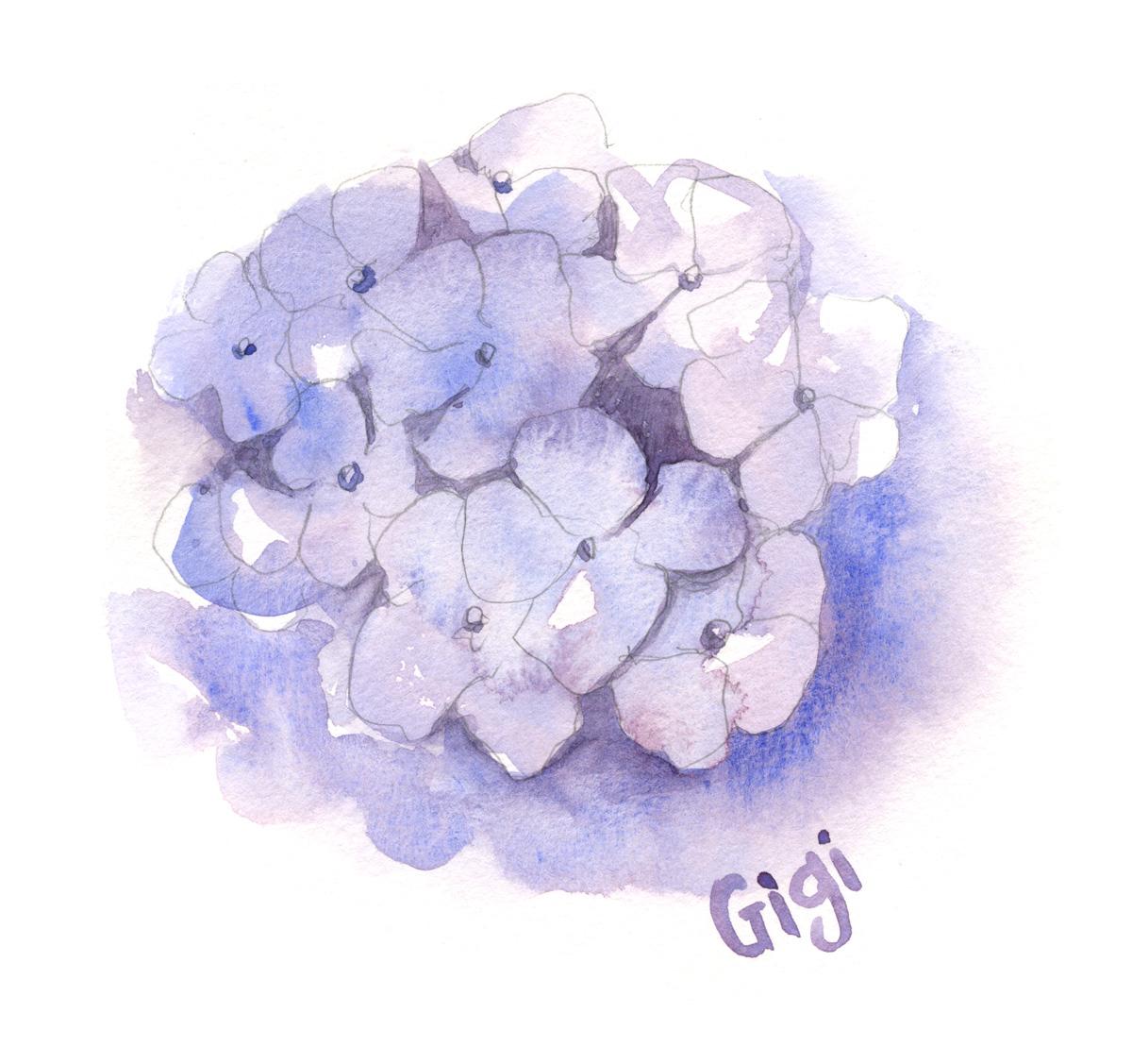 hydrangea 1.jpg