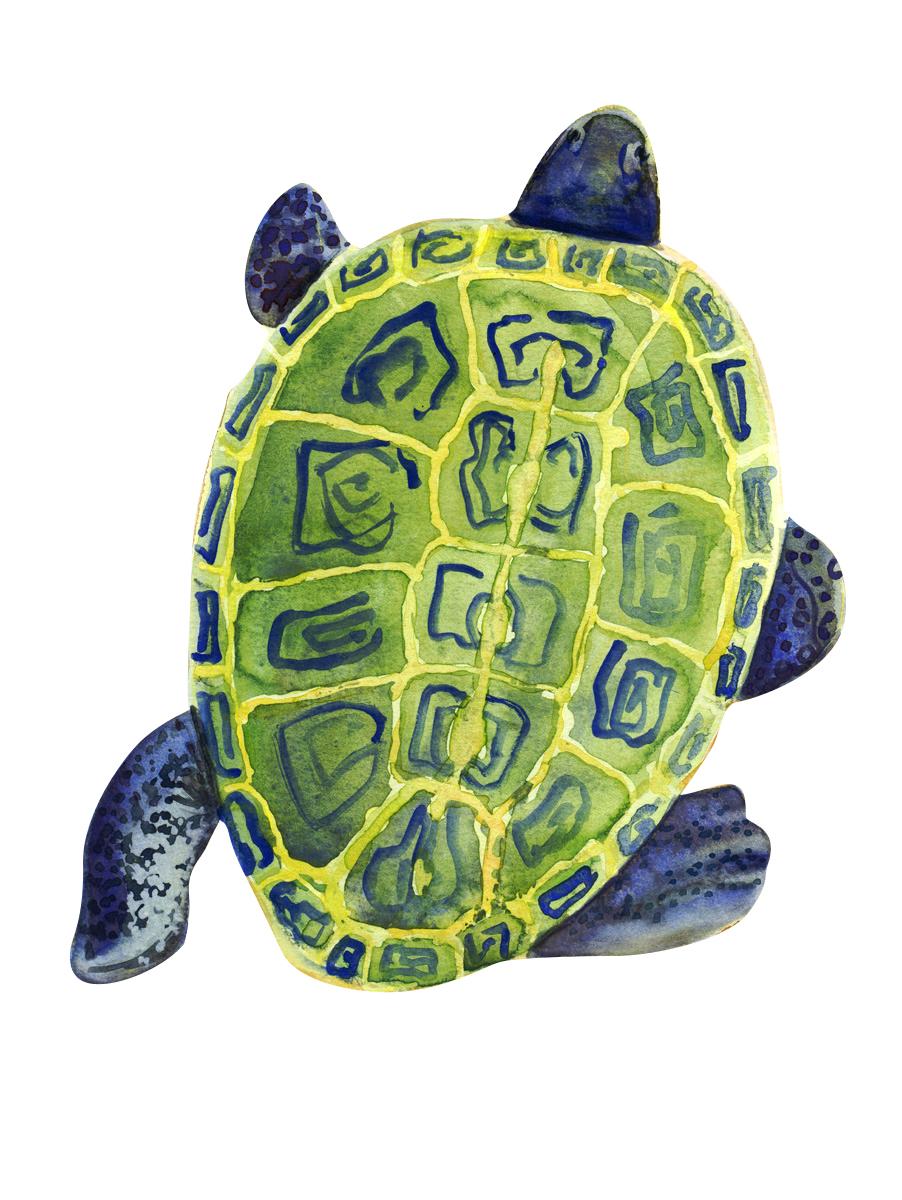 turtle1 copy.jpg