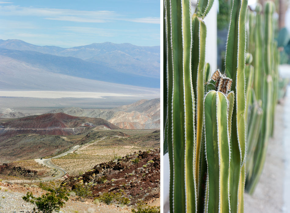 The descent into the valley; cacti in Palm Springs