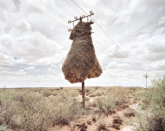 nest on hydro pole.jpg