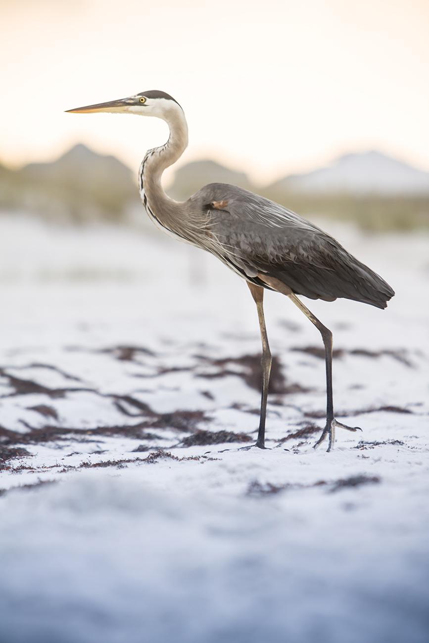 Detail shot of a heron.
