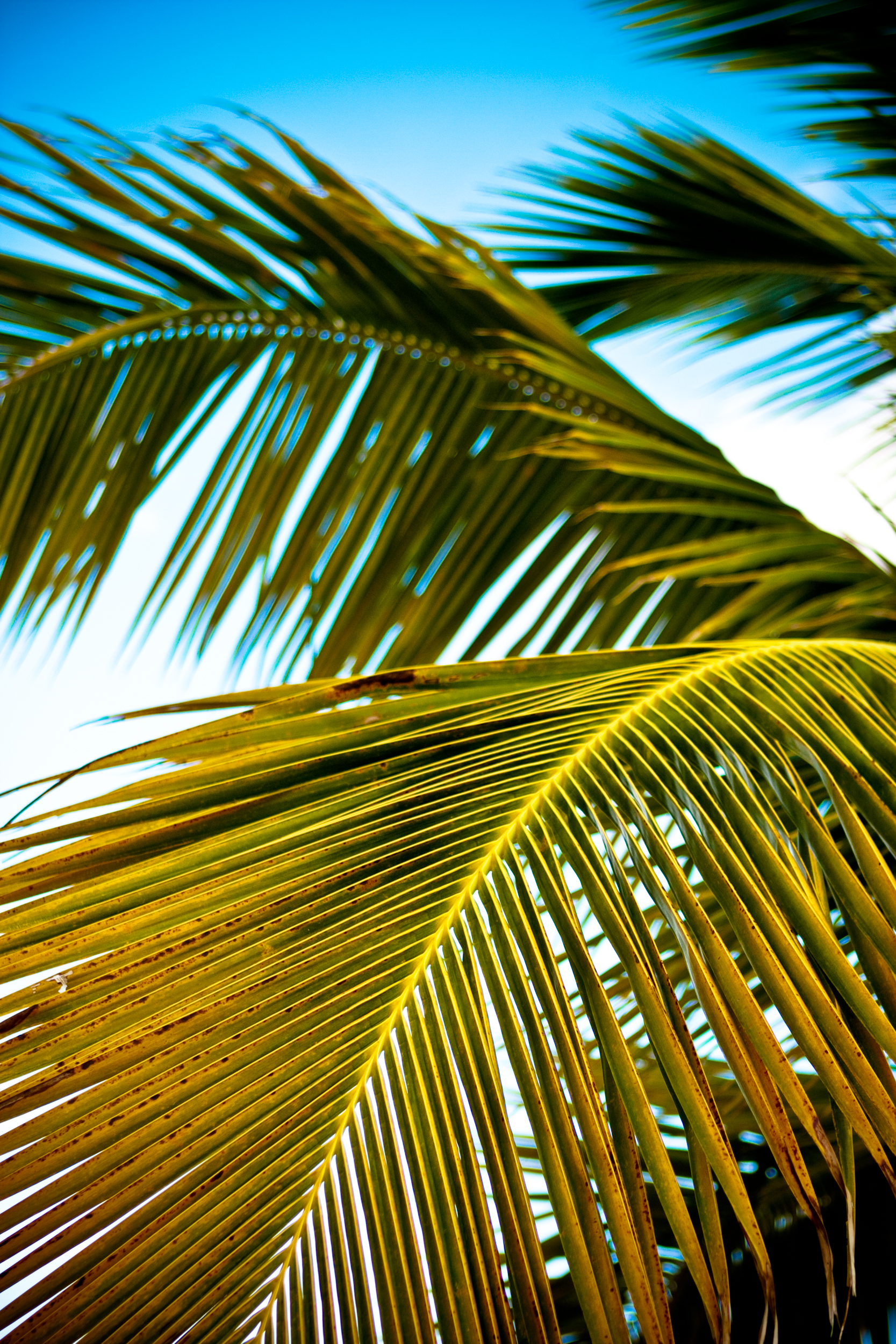 Colorful detail image of palm branches set against a blue sky.