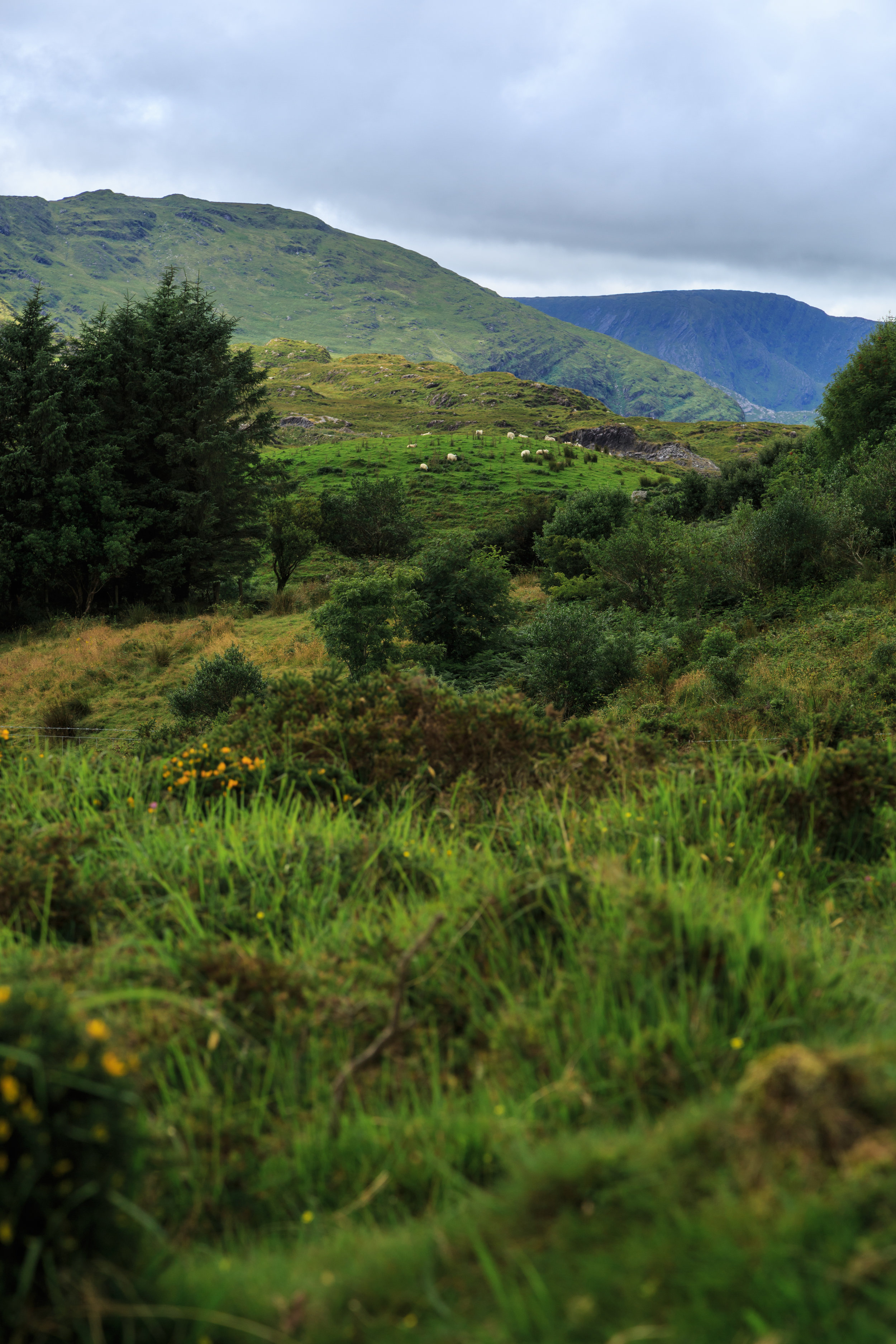 Ireland-36.jpg