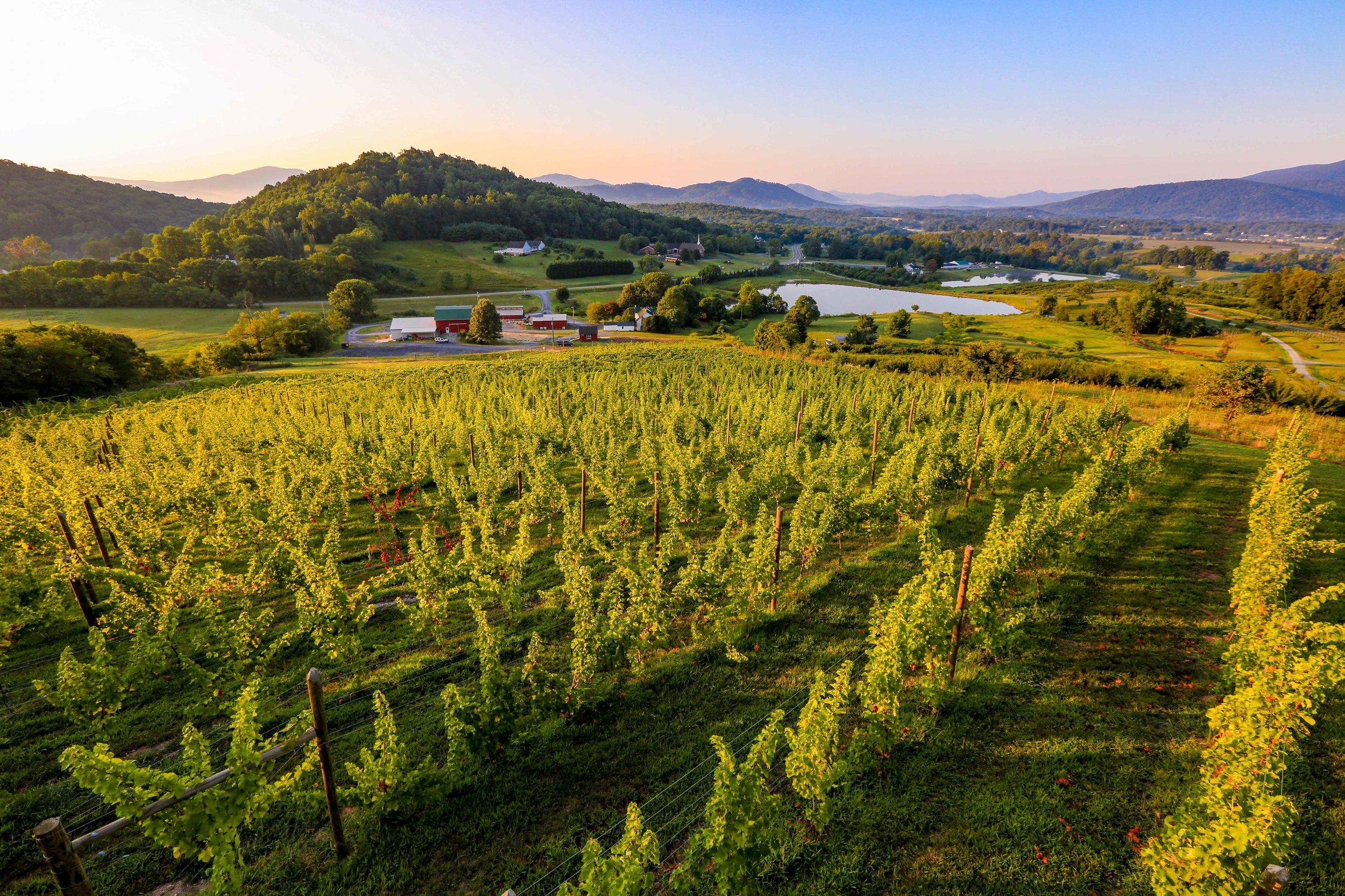 170820-vrv-stock-vineyard-0074-300dpi.jpg