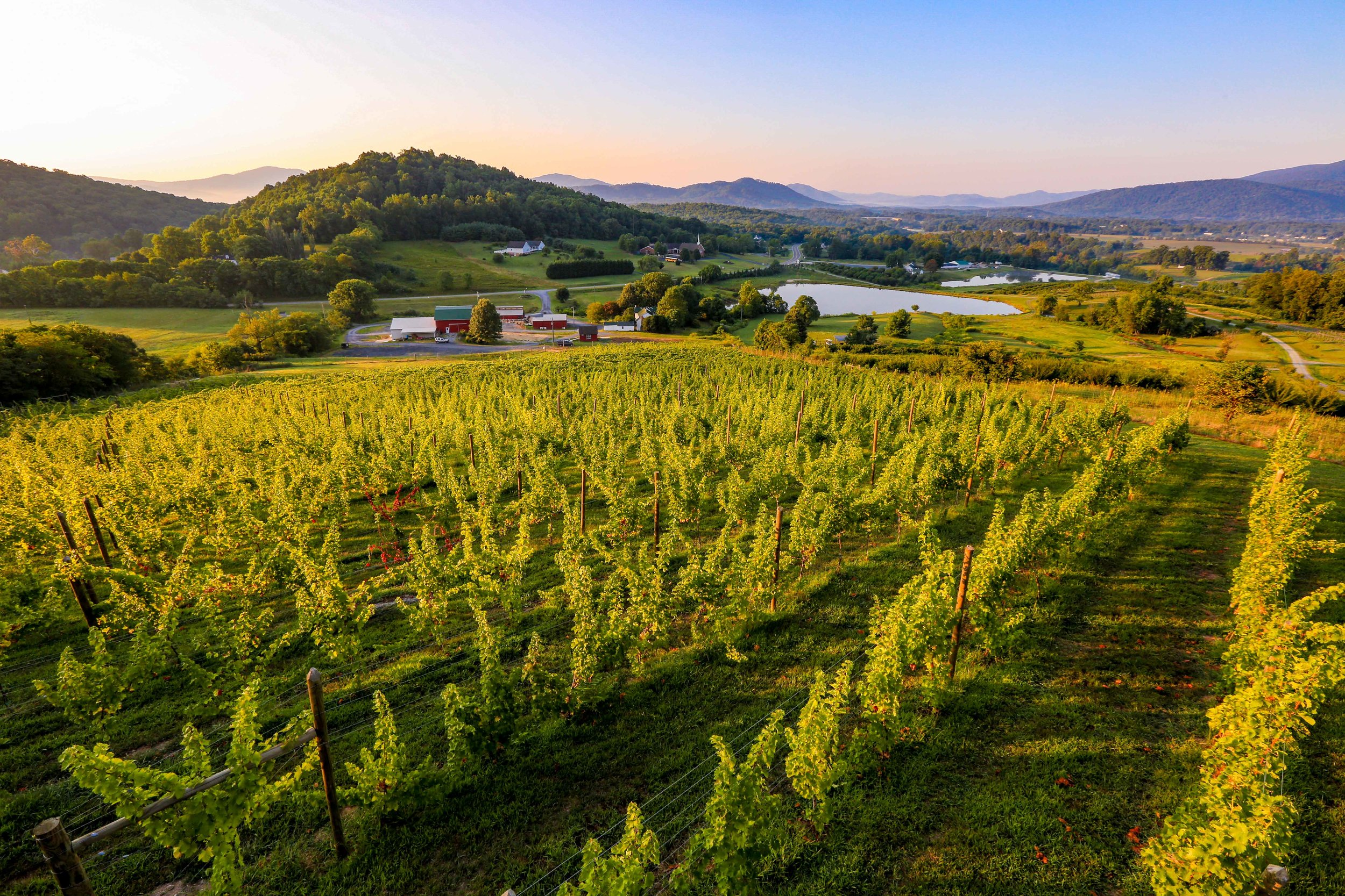 170820-vrv-stock-vineyard-0074-300dpi.jpg