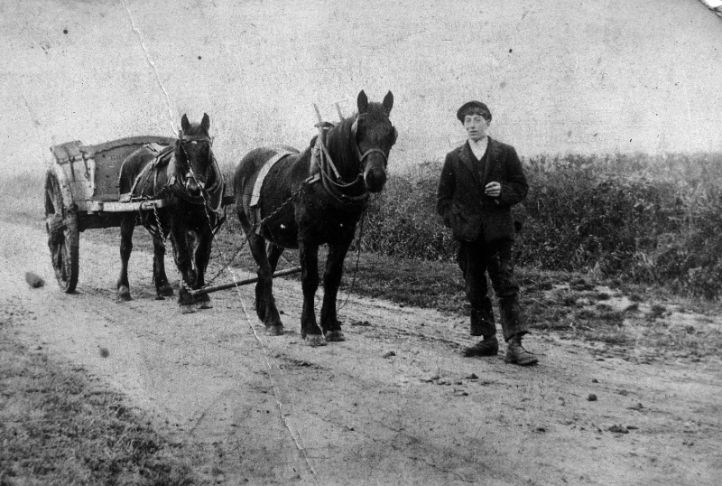 Len Woolaton, aged 17, bringing magels to feed a flock of sheep on Barlings Lane- Now Ruth King's farm. Date of photograph circa 1913.