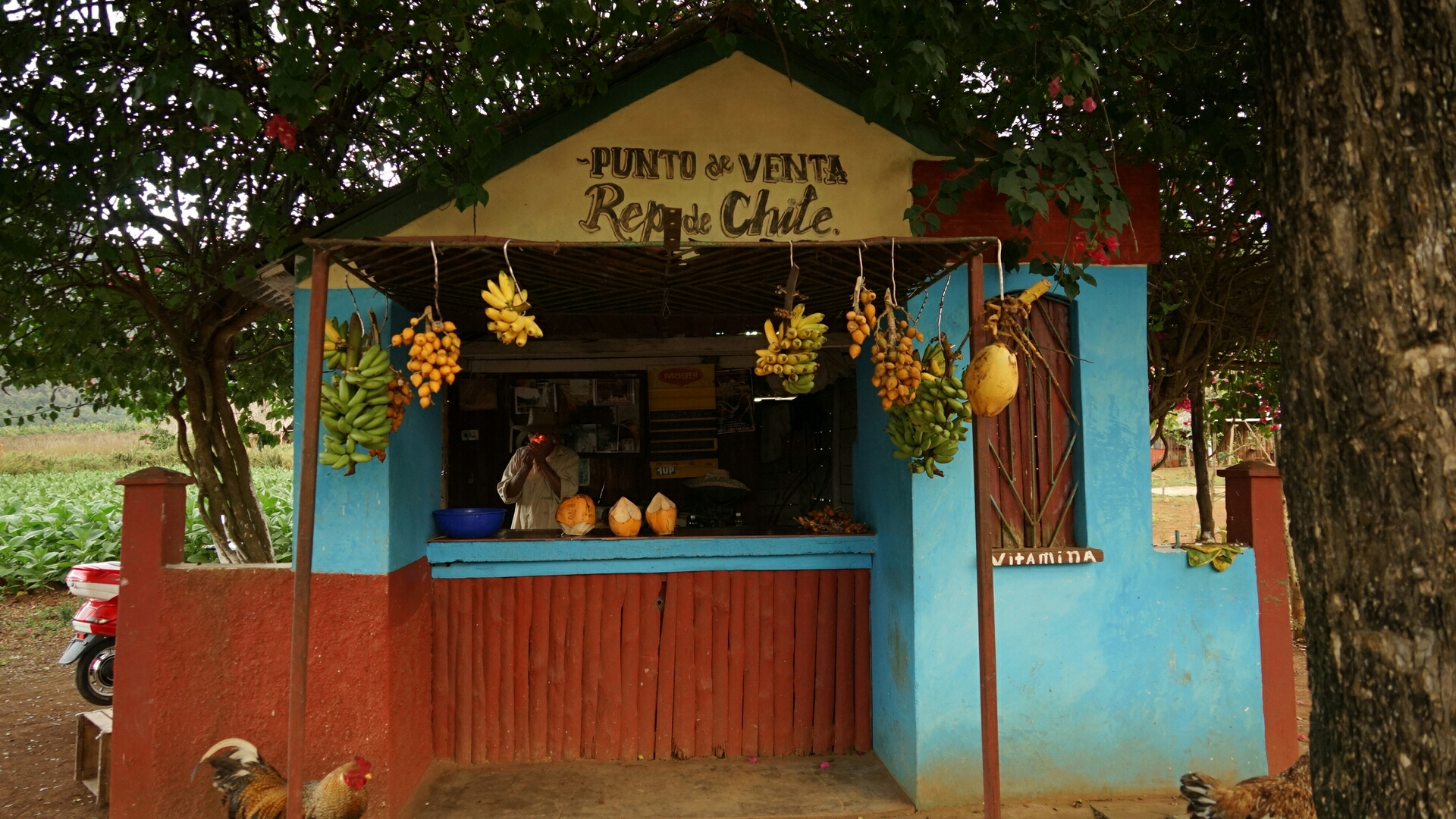 A fruit stand in the village, where I purchased a bunch of tiny bananas for only 1CUC.