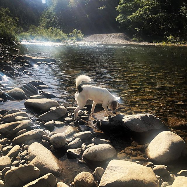 Bella on the rocks.. on the Eel river.