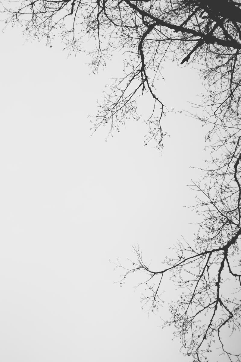 IMG_4574.jpg