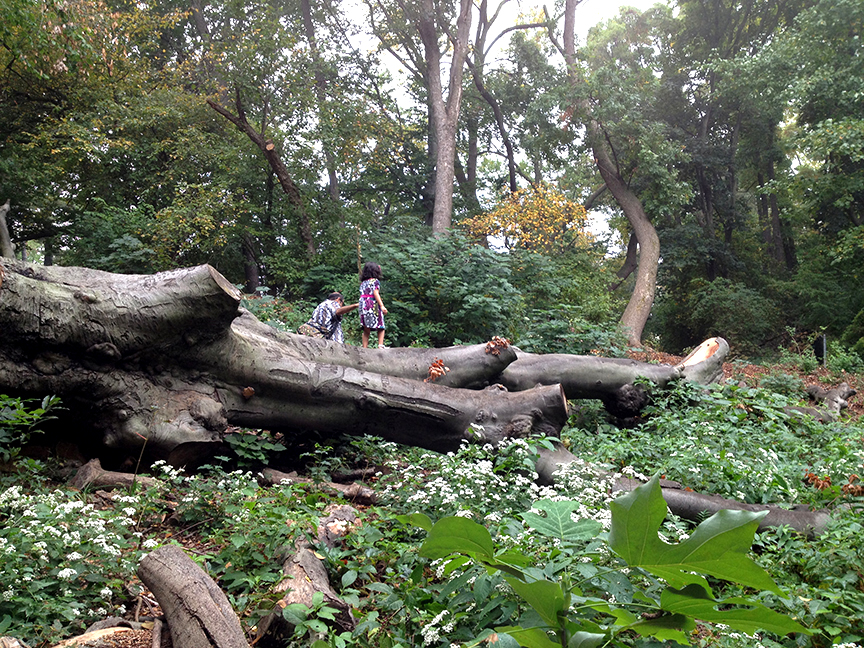 Zucker Natural Exploration Area, Prospect Park, Brooklyn, New York   Project was performed while employed as Assistant Landscape Architect at the  Prospect Park Alliance . Photo credit: Crystal Gaudio