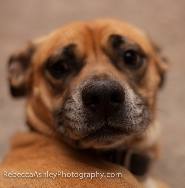 RAshley-Dog2014_MG_2285.jpg