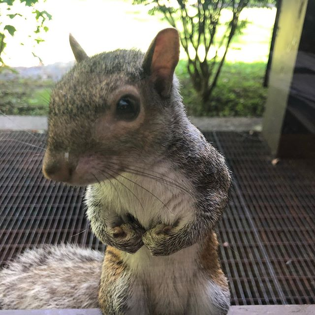 """""""Excuse me. Hello. Have you heard the word of Squirrel Jesus?"""""""