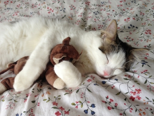 sleeping cat hugging stuffed animal comfort.jpg